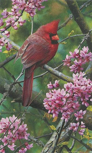 brenders-spark_of_ruby_cardinal.jpg