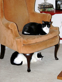 cats-fave-chair2