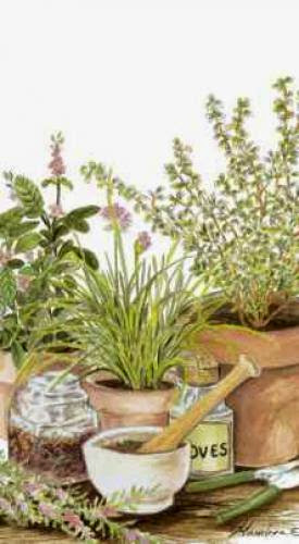 Magickal Properties Of Common Herbs