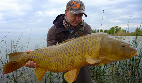 Carp on the fly lake mi 5 0 for Can you eat carp fish