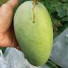 redentormercado avatar