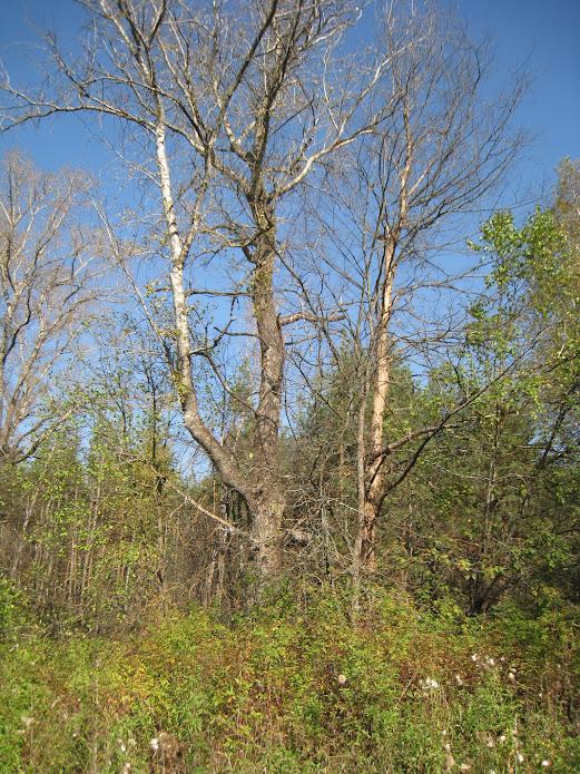Деревья около Курилово
