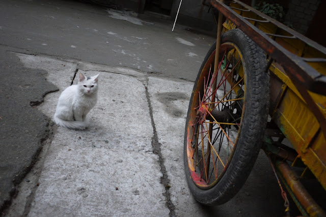 cat sitting near a wheel of a cart outside
