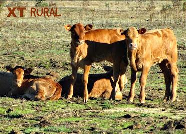 TV RURAL está de volta... Xt+rural