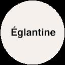 Chevallier Eglantine