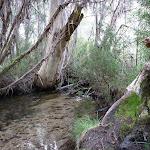 Shingle Creek at Clover Flat Camping area