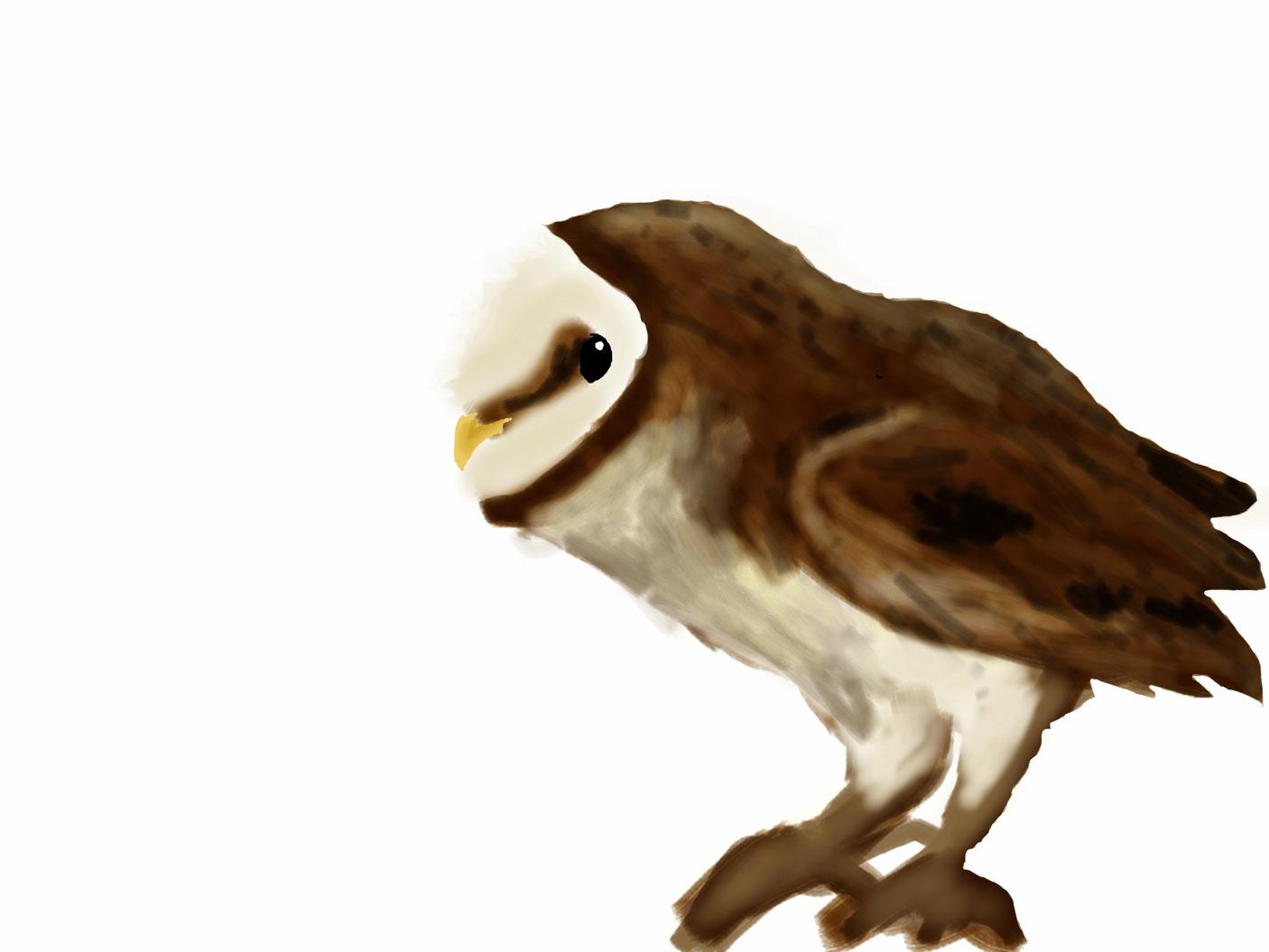 iPad colored owl
