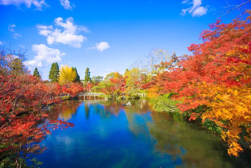 京都 永観堂 紅葉 写真3