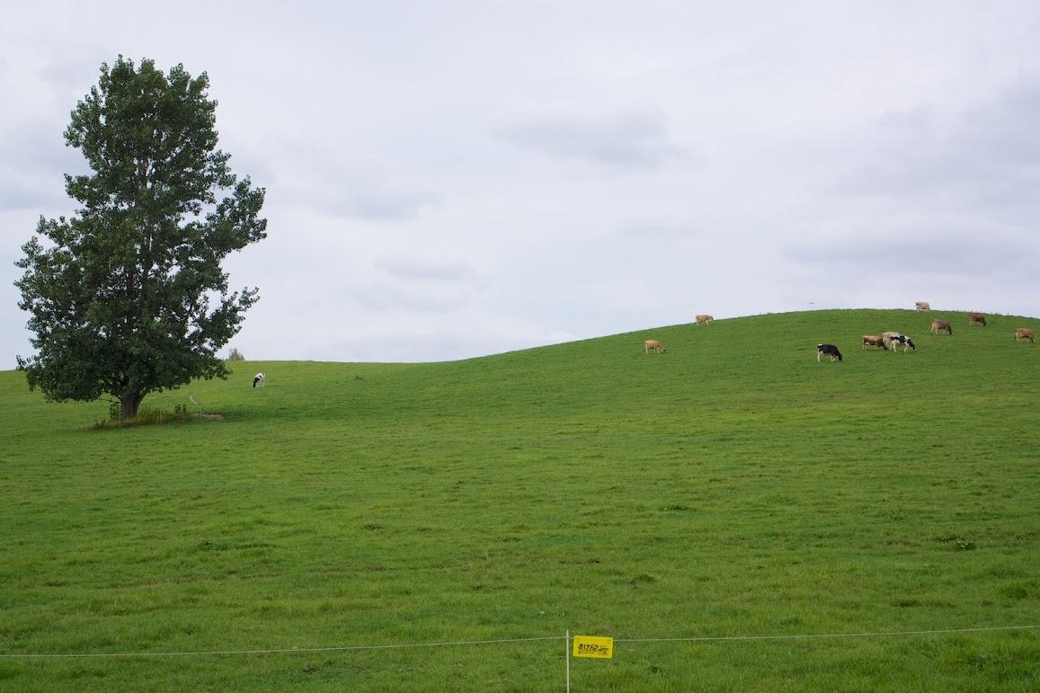 どこまでも続く広大な牧場