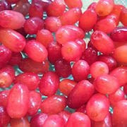 сон виноград