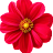 Zeba Shakira avatar image