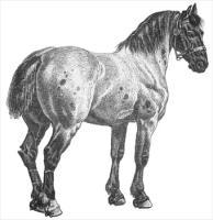 horse-17.jpg
