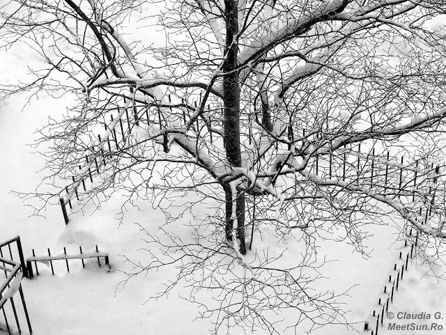 Un copac, o fereastră.