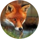 Zack fox
