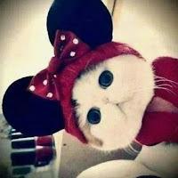 not-an-adorable-cat