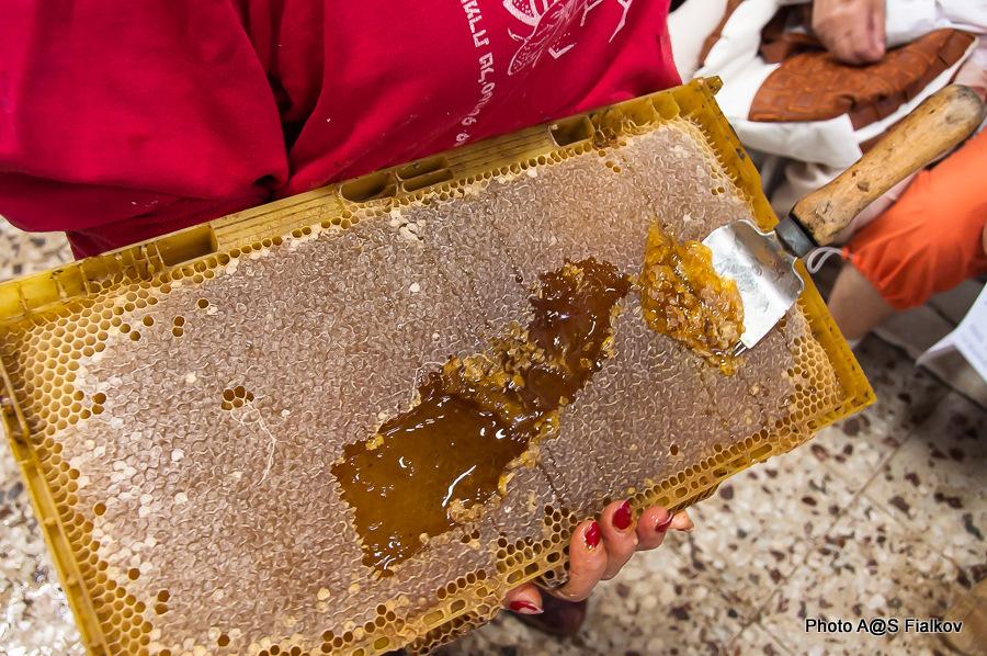 Мед в Израиле. Соты. Экскурсия в Израиле, гид Светлана Фиалкова.