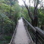 Manly Scenic Walkway (70519)