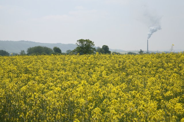 View through rape field towards Westbury cement works - geograph.org.uk - 424300