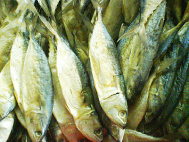 Peda fishes