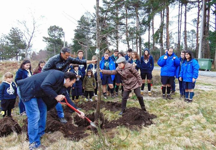 Plantação de carvalhos assinala Dia da Árvore