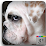 LOVADOG.com's profile photo