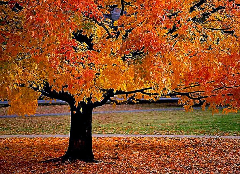 fall landscape wallpaper filename free fall landscape wallpaper