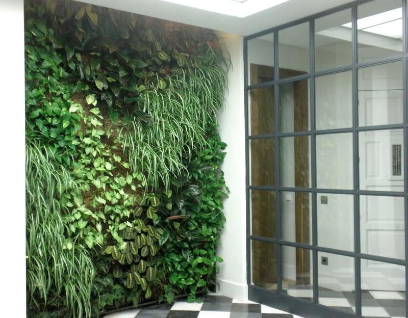 diseo diseo jardn jardinera jardn vertical proyecto madrid interior iluminacin lux filodendro scandens singonio syngonium