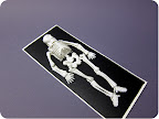 Clean bones and arrange on skeleton chart.