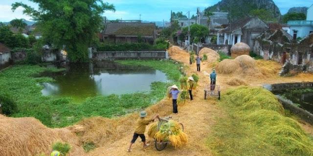 Những bài thơ hay viết về cảnh làng quê, quê hương tôi