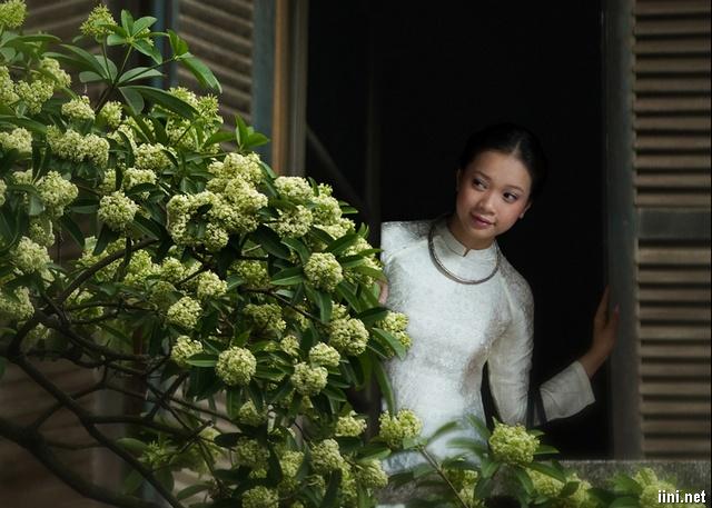 Hoa sữa và thiếu nữ Hà Nội