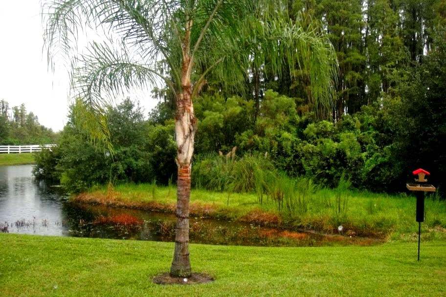 land o lakes villa