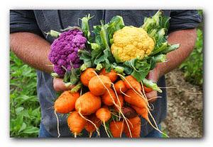 Сбор урожая на даче в сентябре
