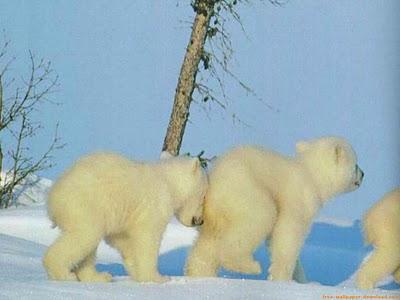 dralive-oso-empujando-hermano-tropezando.jpg