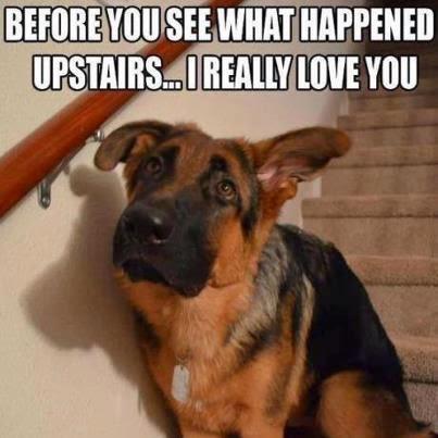 saddog-2015-03-4-09-24.jpg