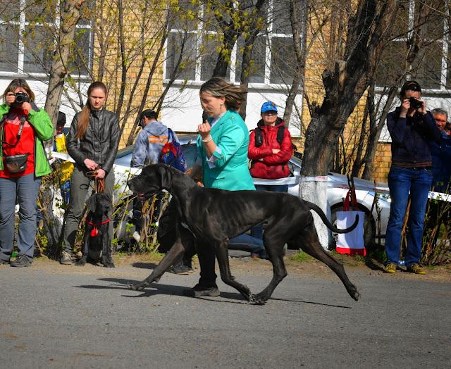 Кубок Аризоны-14(ПК)+ЧРКФ, Красноярск, 27 апреля 2014 DSC_5607