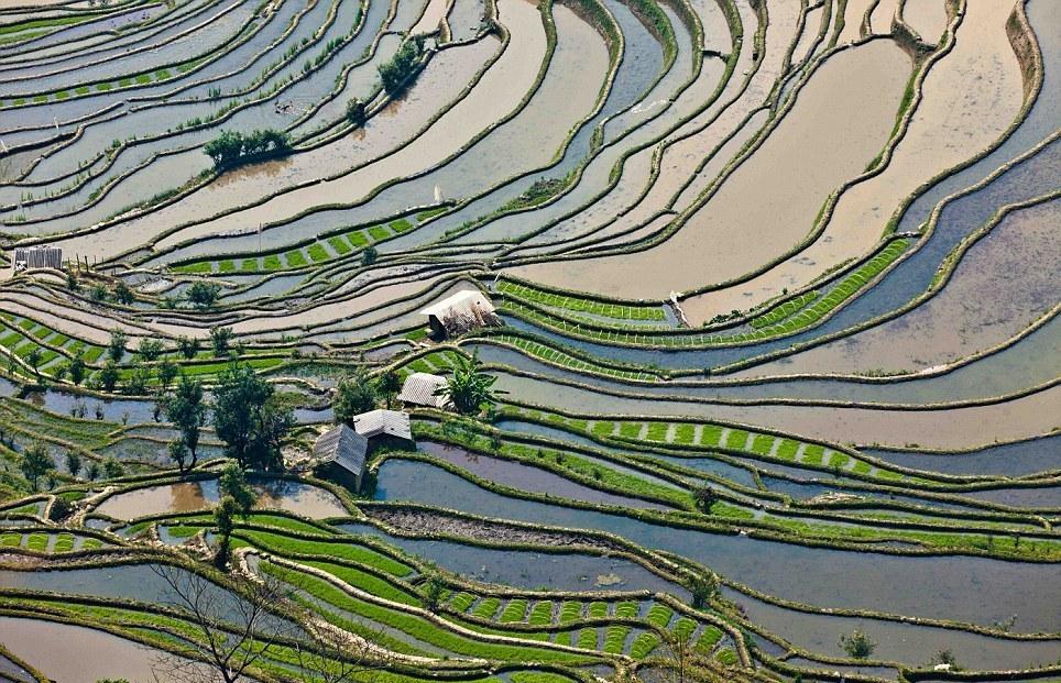 مصاطب الأرز المنحوتة باليد على المنحدرات. -q7LDvTIP43Yt3ZkTzmg