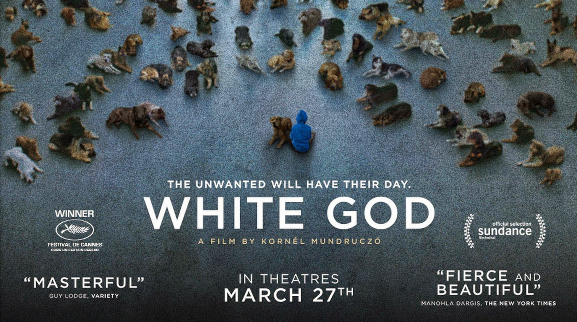 Λευκός Θεός (Fehér Isten/ White God) Wallpaper