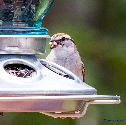 Sparrow_Seed3-2014-06-8-21-13.jpg