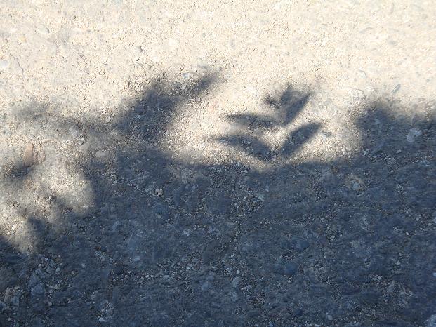 игра теней фото