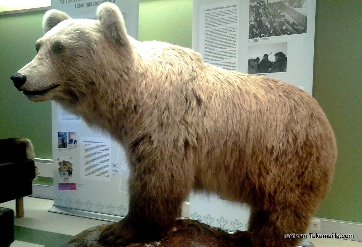 Suomen Metsästäjäliiton karhu