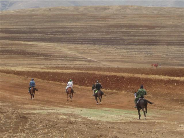 four riders racing their pony's down track with dust billowing out behind.