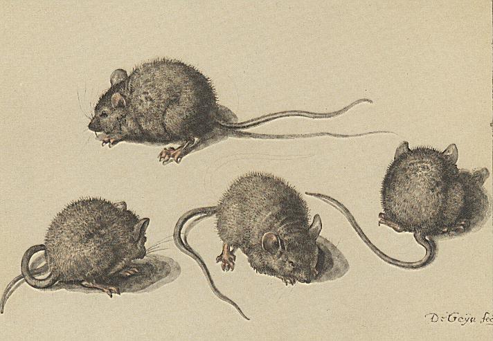 viermaal een muisje, jacob de gheyn ii