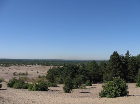 pustynia zarasta