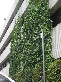 Japón Utiliza La Naturaleza Para Combatir El Calor