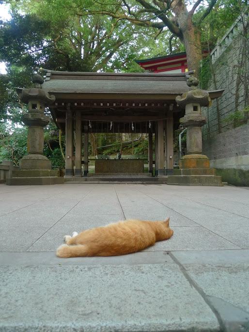 chat enoshima