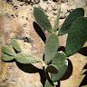Avatar of silvia turconi