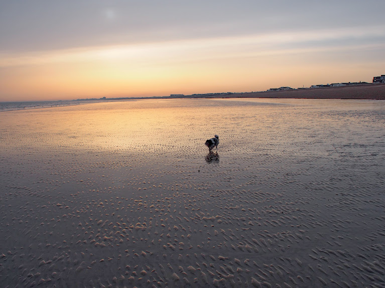 bruce on shoreham beach