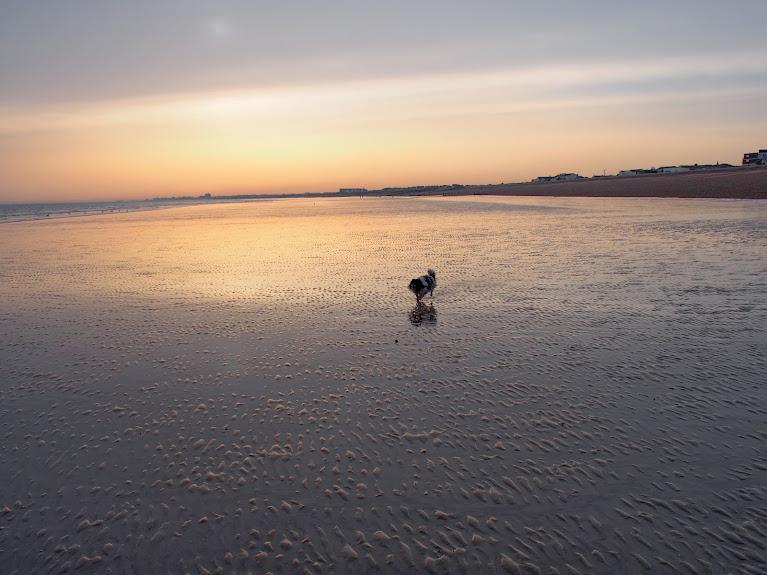 bruce on shoreham beach