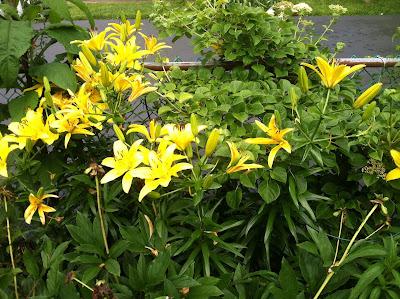 Pretty lillies