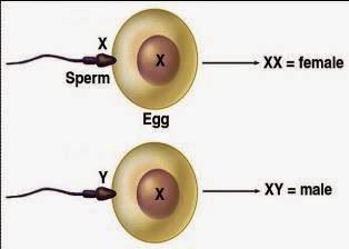 tips hamil anak laki laki
